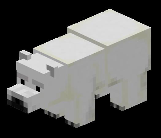 Детеныш Белого медведя
